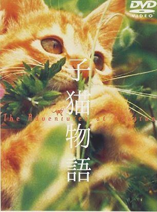 人間は映像に全く出ないドキュメンタリーではない動物映画「子猫物語」