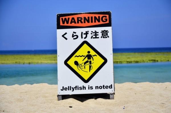 """【夏休み都市伝説】""""お盆のあとはクラゲが多い""""は本当? 海に入ってはいけない?"""