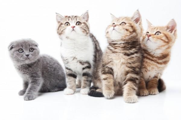 【猫好きは要チェック】話題の「猫マンション」って何? 利用者の実態、メリット・デメリット