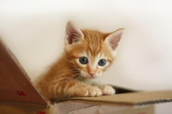 """【猫を飼いたい人、必見】年々増加する、""""保護猫譲渡"""" 引き取りの流れと注意点"""