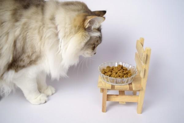 【猫と猛暑】夏の暑さに耐えられる?長毛種の猫を日本で飼うときの注意点