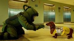 ブラックユーモア満載で犬と飼い主を描く「トッド・ソロンズの子犬物語」