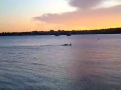 シャンプレーン湖に出現したのはナゾの水棲獣チャンプか