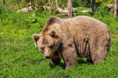 高校の体育の授業中、グラウンドに突然熊が出没 生徒との距離100Mに恐怖の声相次ぐ