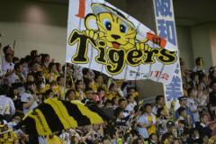 FA人的補償で鶴岡が加入 阪神の正捕手は誰がいい?
