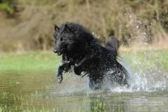 秀吉が発見した「羽の生えた犬」の正体は?