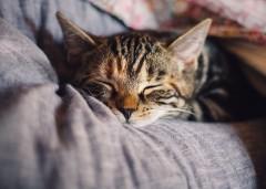 猫の飼い主は要注意! 猫に引っかかれた女性、目の色が変色し顔が腫れあがる…過去には死亡例も