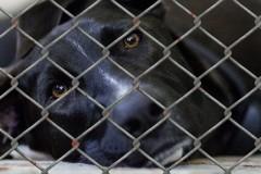 他人の飼い犬を殺した男に実刑判決 量刑が犯罪に見合っているのか疑問視する声も