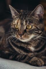 猫を連れ去り50匹以上殺害 51歳男の身勝手な動機による凶行に戦慄走る