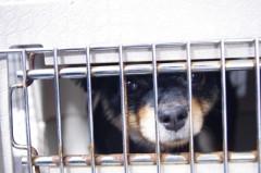 動物保護施設から犬を引き取った男、直後に犬を撲殺 残酷すぎる動機にネット大炎上