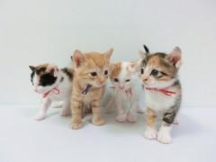 イギリスで生後6か月未満の子犬・子猫の販売禁止へ ネットは称賛、日本の実情を嘆く