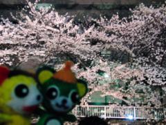 たった1500円で『ブラタモリ』体験!? 知られざる花見スポットへご案内!!