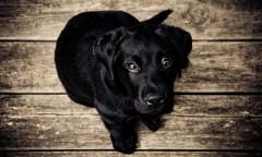 子犬の口を2週間縛り付け大怪我をさせた飼い主の女、逮捕 身勝手な動機に怒りの声相次ぐ