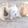 ペットとして需要が高まるうさぎ 飼い方のコツや先住ペットとの相性は?