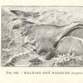 実は未確認生物の目撃例だった?「化け鯨」