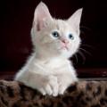"""""""インスタ映え"""" に毎月30万円、究極の「猫事件」とは【男が出会ったとんでもない女】"""