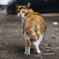 猫やハトを無残に殺害し、死骸を道に放置 臓器を取り出すなど卑劣な犯行に怒りの声相次ぐ