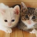 """【猫好き必読!】""""猫団子""""は夢だけど…体験談・多頭飼いのリスク"""